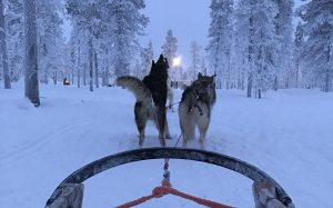 kakslauttanen_arctic_resort_Glass_igloos_finland_activities_husky_sledding